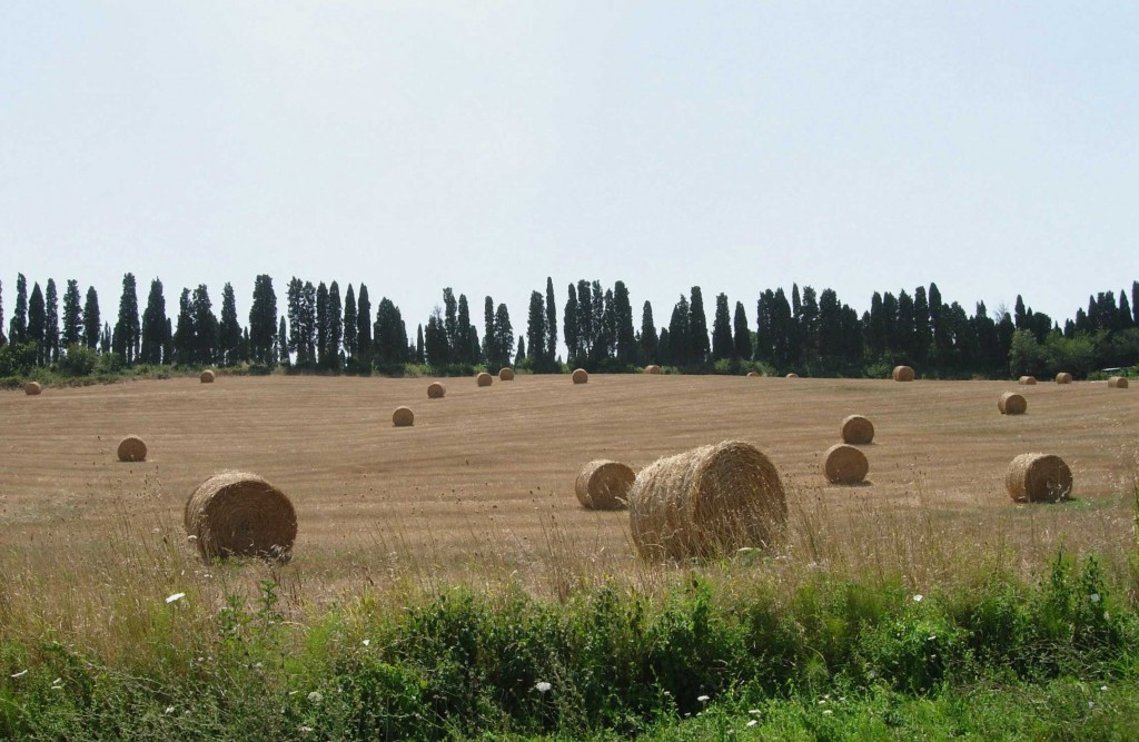 Tuscany Wine and Oil Tour